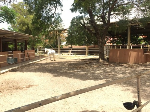 Prachtige manege in jongbloed te koop at home curacao for Manege te koop